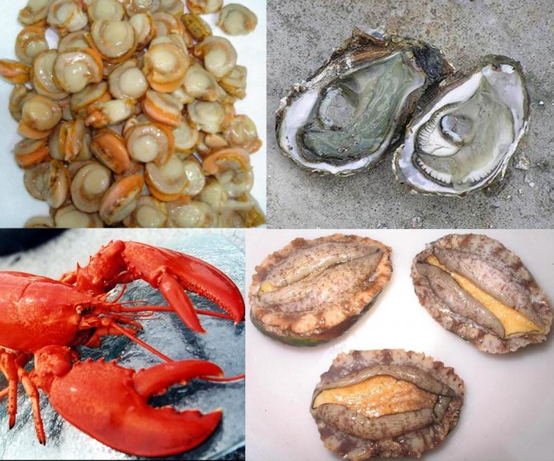 常見的幾種美味海鮮的正確吃法!跟著做健康能量多出200%!...