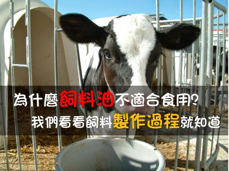 為什麼飼料油不適合食用,我們看看飼料製作過程就知道...