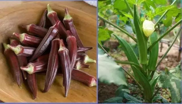【驚百科】賣菜30多年的菜小販透漏的,降血糖、防治三高、植物...