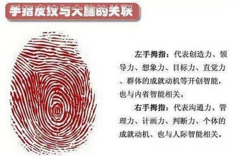 指紋上的圈圈代表什麼?暗示你的健康和一生運勢!...