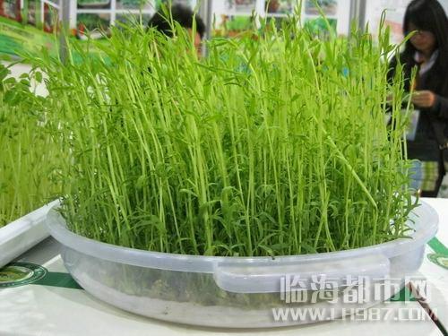 最好種的蔬菜!空心菜簡易重覆收成栽種法!!詳細教學讓您下個禮...