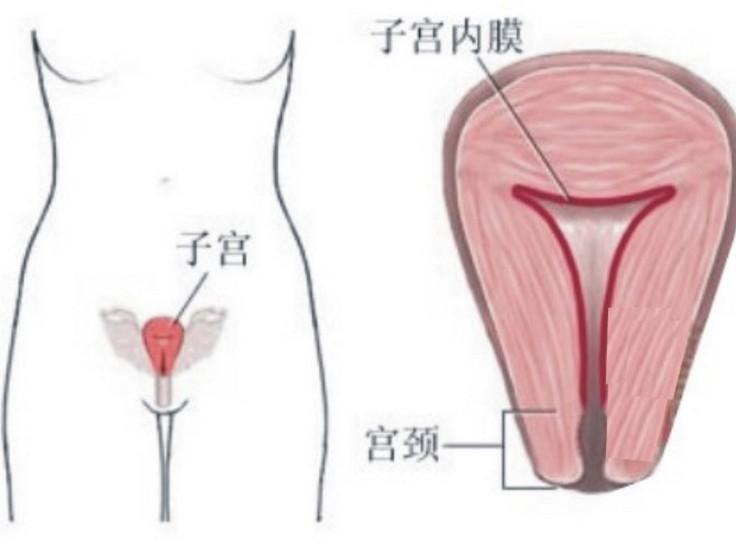 3種方法幫助你解決月經血流量以及持續時間,女人必看,男人也必...