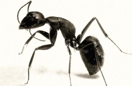 原來這樣就能趕走蟑螂螞蟻蚊子,太神奇了!!趕快分享給家人朋友...