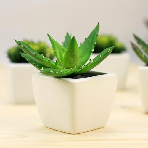 推薦9款「吸毒」植物!選一盆搬回家吧!!...