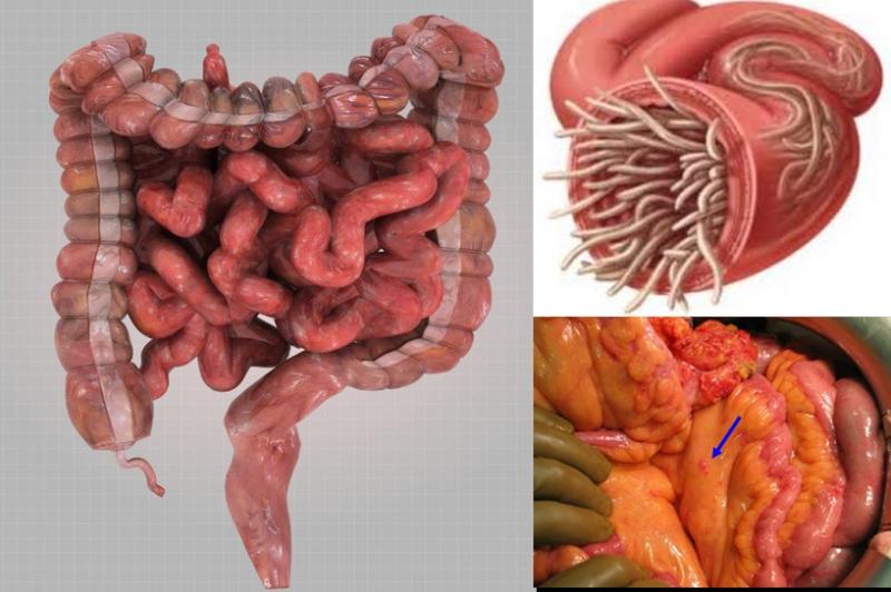 九款「清腸美食」掃淨你的腸道垃圾!輕鬆排毒、減肥、去菌!為了...