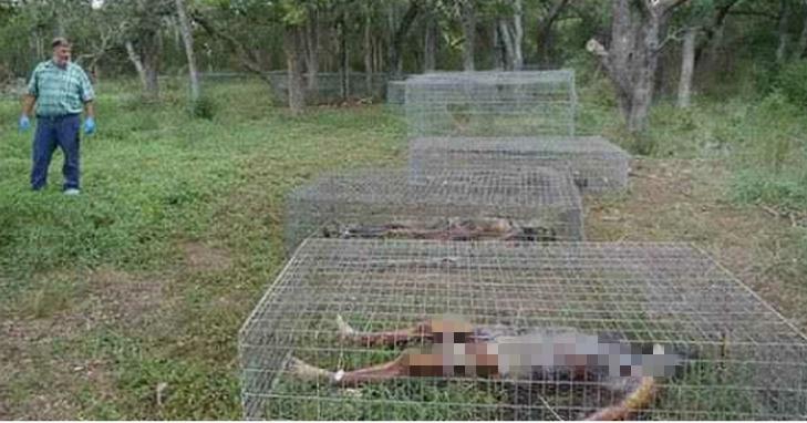 農場裡沒有養任何的動物!而竟然養的是人屍體!!...