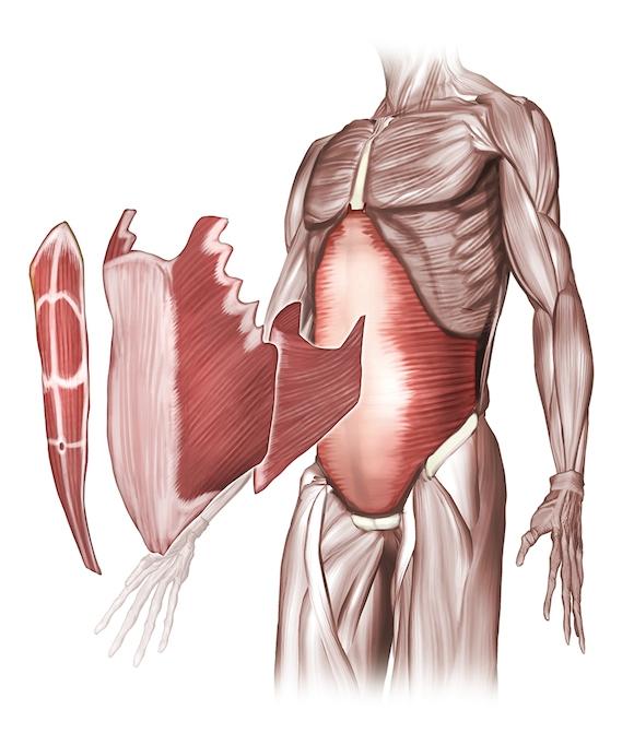 簡易徒手療法讓「酸痛」不再(五)-腹痛、腰痛...