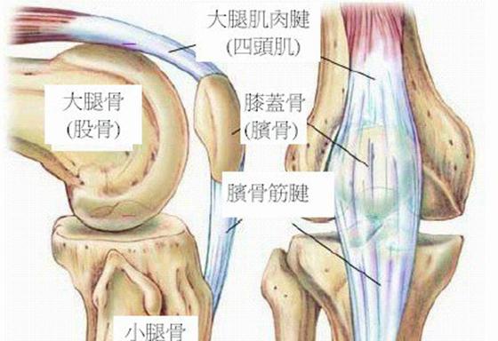 膝蓋骨痛該怎麼救!腰腿疼痛的人一定要看!...
