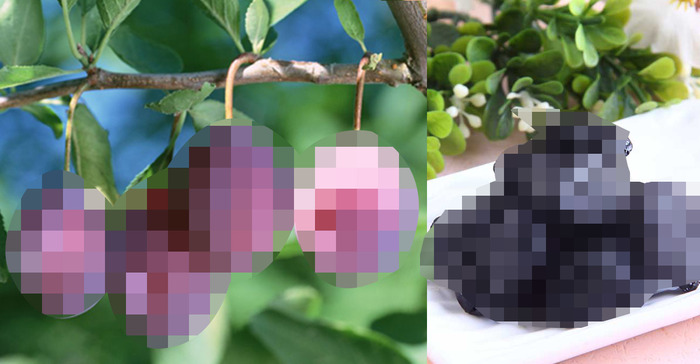 全家人都能吃的〝超級水果〞!美白、助排便、補血!!到底是什麼...