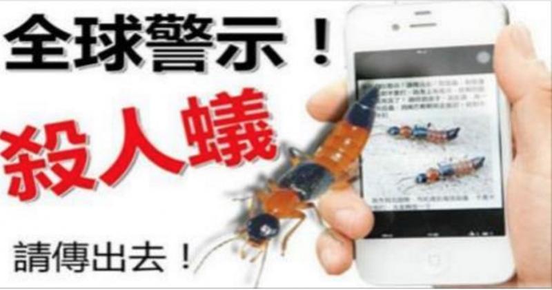 注意!!如果發現這螞蟻在你身上,絕對不要打,牠身上有毒液,足...