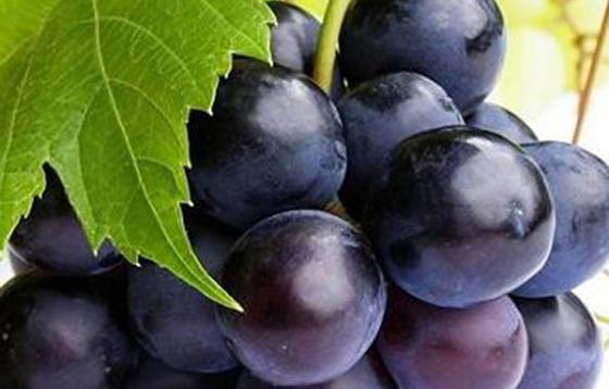 4種最補腎又助防腎虛的水果,尤其是女生一定要多吃!!...