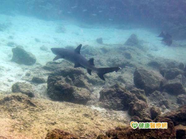 深海魚含重金屬吃藍藻可排毒...