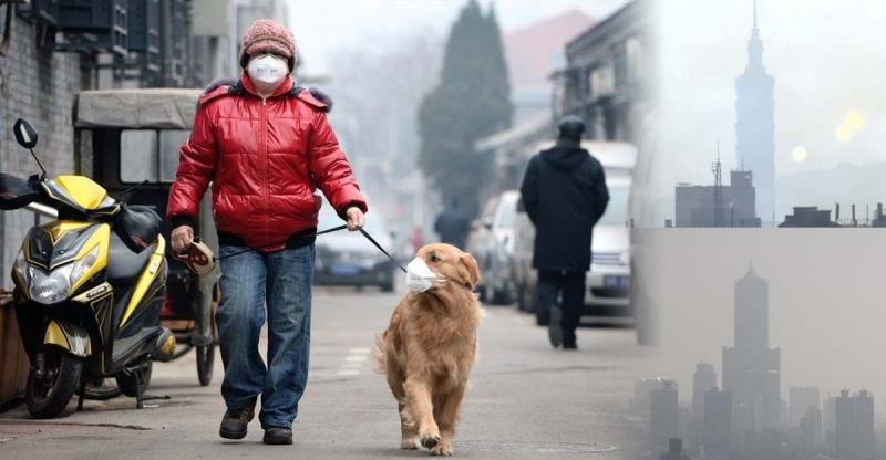 空氣品質拉警報!!4大清肺食物讓你的肺深呼吸!!...