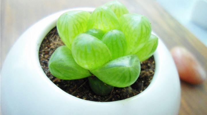12生肖的「招財植物」!擺一盆在家裡,清新空氣又旺你的財運!...