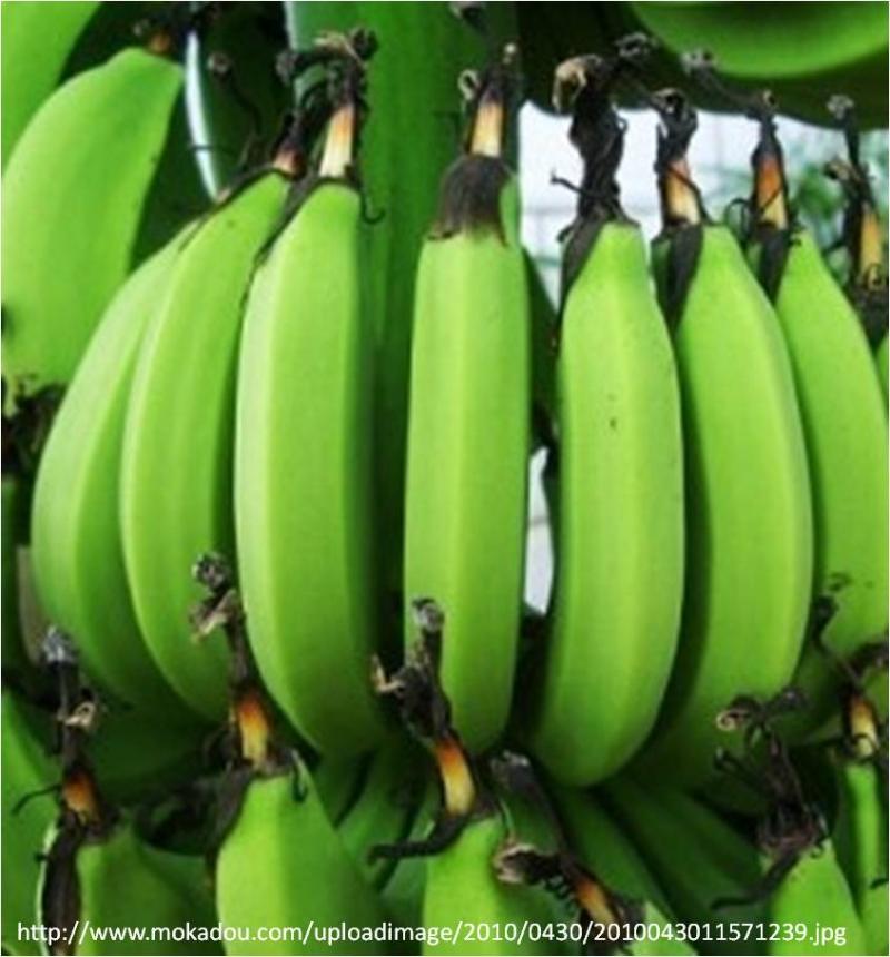 驚!香蕉也會讓人便秘?...