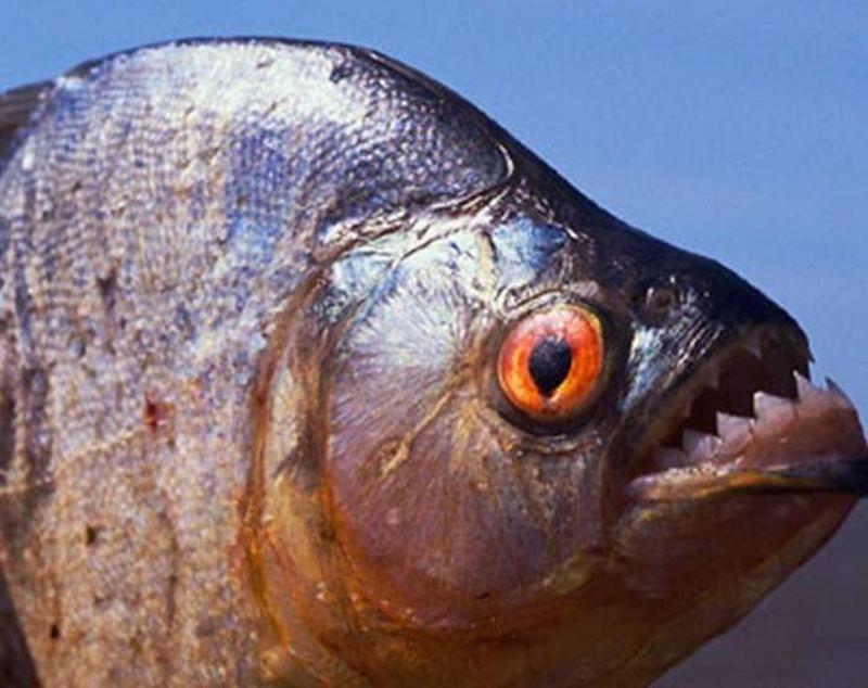 太震驚了!「魚」的真相,不是用來吃的,世人都不知道!原來這麼...