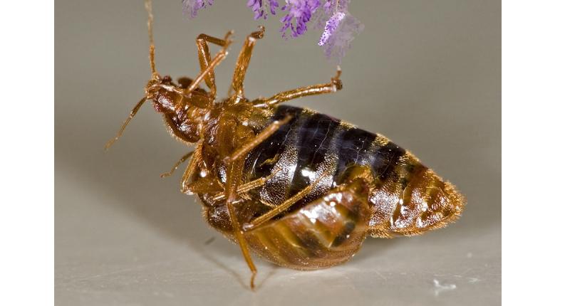 可怕!十年前一隻蟲子從腳背鑽進他的身體,一直沒出來還在繁殖…...