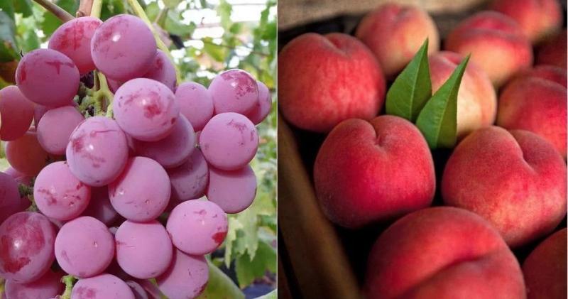 原來水果是按月份吃的,9月就要吃這個!...