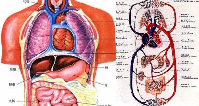 只有醫生才知道,人體八大系統發病順序竟然是?!提前護理超重要...