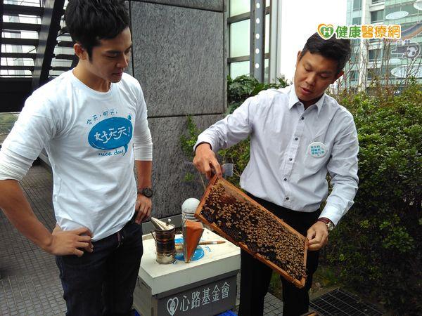 城市養蜂蜜有毒?花粉農藥重金屬零檢出...