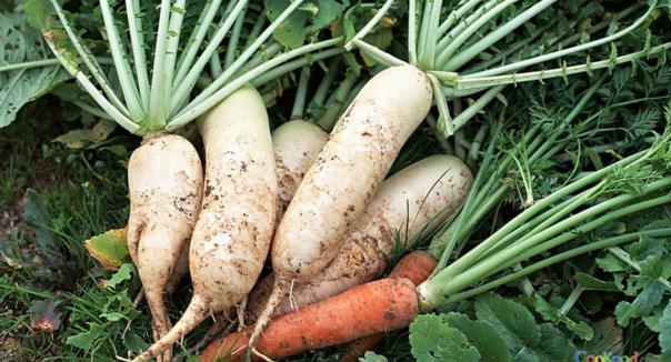蘿蔔這樣吃,100%得癌症!十萬火急,快轉發讓更多人知道吧!...