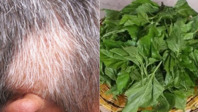 只要10塊錢就能治好你的白頭髮,每天洗一次,堅持一周竟然就長...