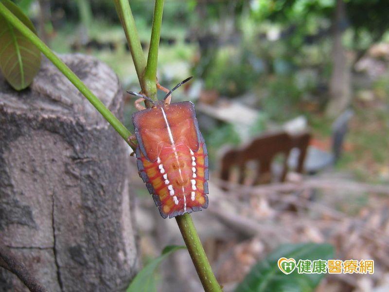 鮮豔昆蟲的逆襲亂抓當心毒液攻擊...