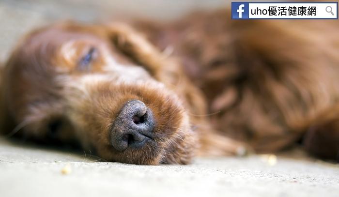 寵物突然死亡可能觸發飼主心理危機?!...