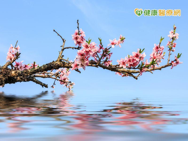 春天氣候變化多端小心「桃花癲」發作...