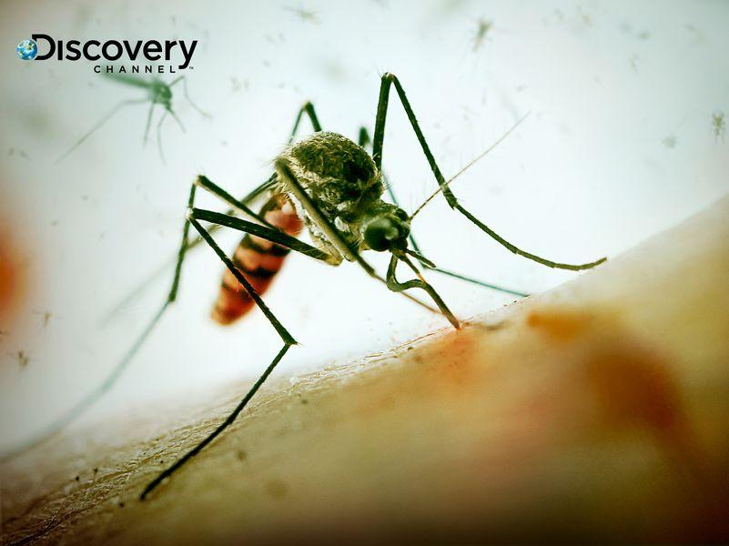 蚊子傳染病猖獗一年死75萬人...