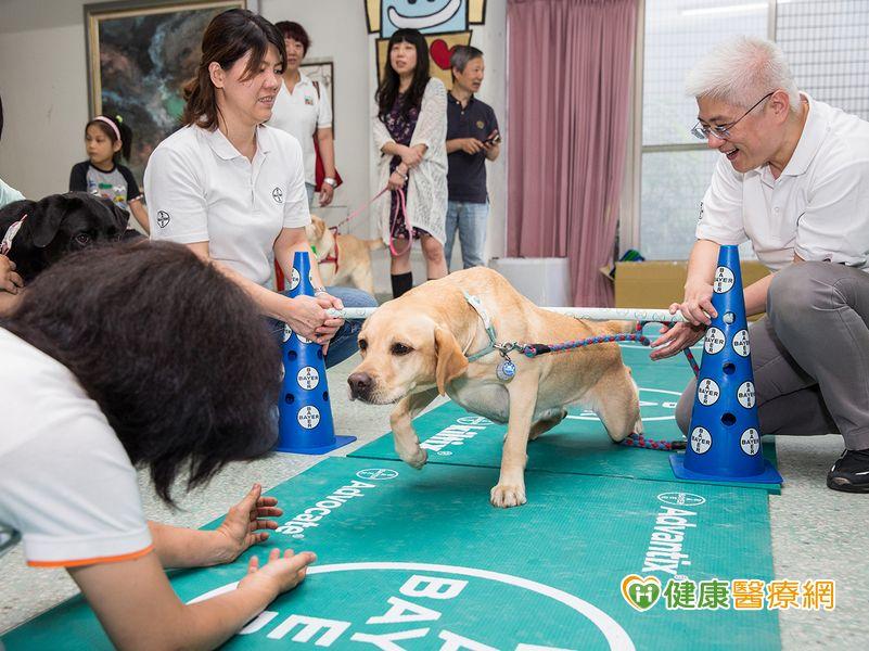 惠光推廣導盲犬體適能強化中老年犬肌耐力...