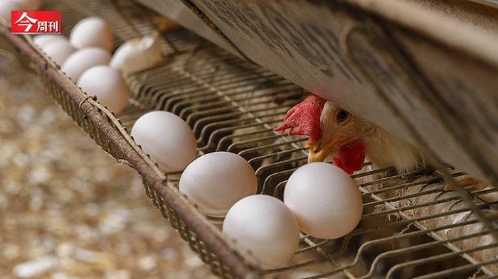 一顆雞蛋為何讓食品大廠都搶進?...