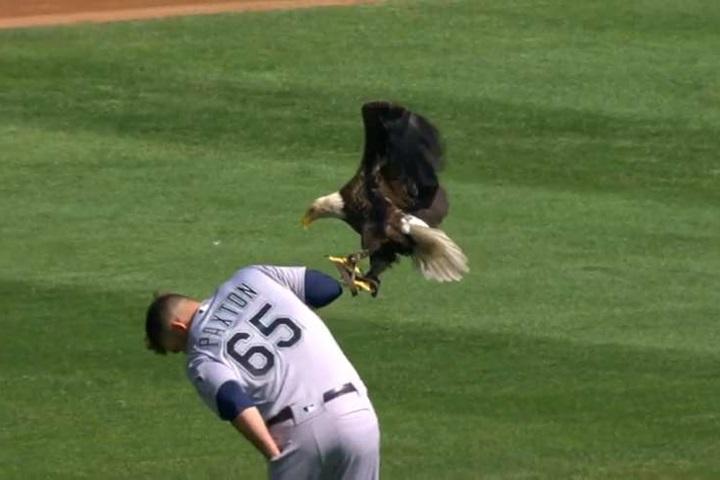 大聯盟場邊趣味多!「白頭鷹降臨」嚇壞球員...