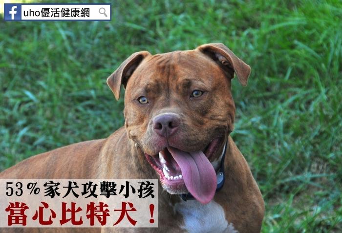 53%家犬攻擊小孩當心比特犬!...