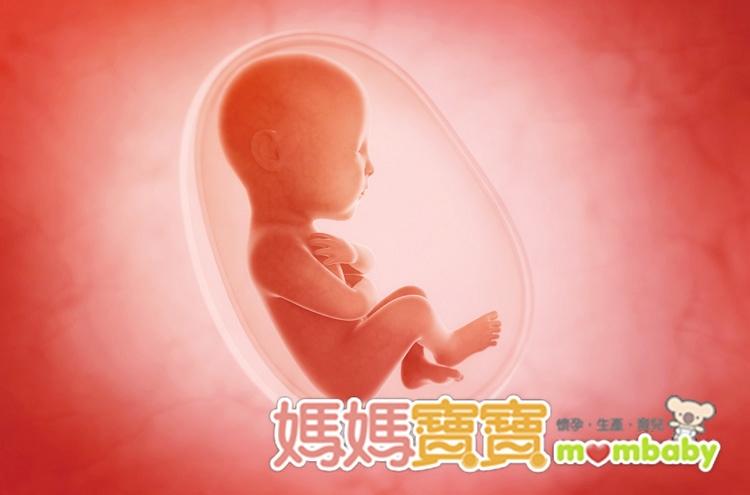 胎位不正只能剖腹產嗎?胎位不正原因與姿勢有哪些?LIFE生...